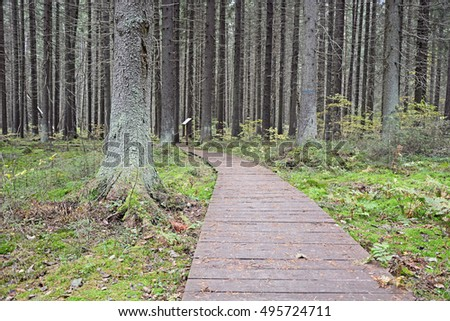 Eco forest path