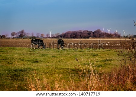 Eco-friendly countryside landscape with wind power plant and feeding cows. Green silky meadow, harmony, safe power supply  - stock photo