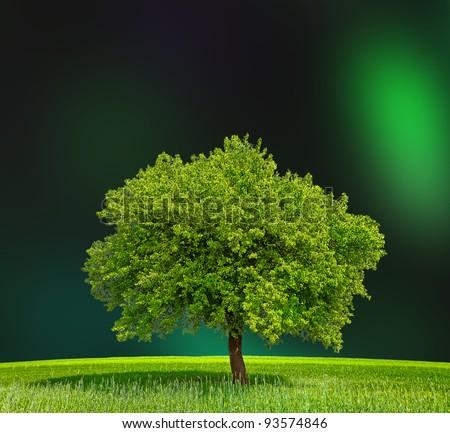 Eco Green Zone - stock photo