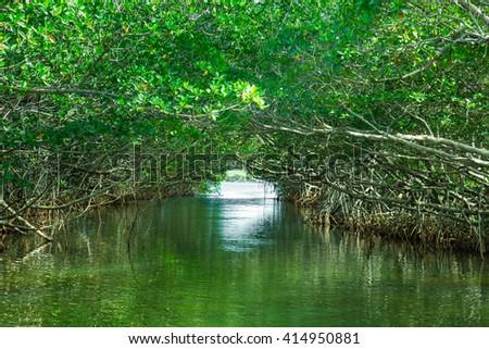 Eco-tourism image of saltwater Florida mangroves - stock photo
