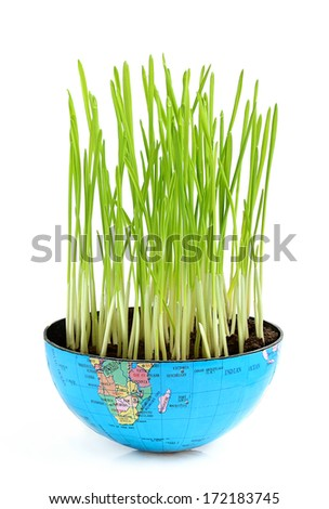 Ecological food.Wheat germ in the globe. - stock photo