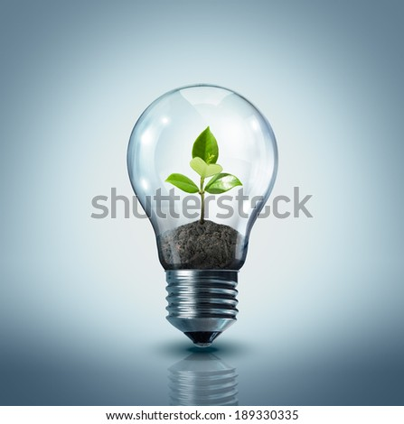 ecological idea - plant in lamp  - stock photo