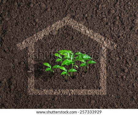 Ecological live house growing concept - stock photo