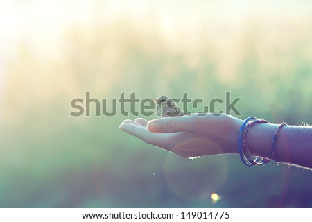 ecology concept - bird on a hand in the morning - stock photo