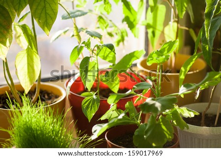 Ecology concept. Potted green plants on window sill indoors