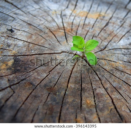 Ecology concept. Rising sprout of old wood and symbolizes the struggle for a new life - stock photo