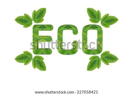Ecology icon set.(Idea form leaf create) - stock photo