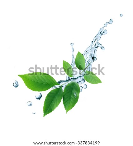 Ecology symbol. Nice twig with green leaves and water drops on white background - stock photo