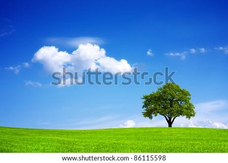 Ecosystem - stock photo