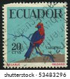 ECUADOR - CIRCA 1973: stamp printed by Ecuador, shows parrot, circa 1973. - stock photo