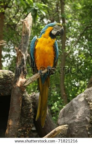 ecuadorian parrot - stock photo