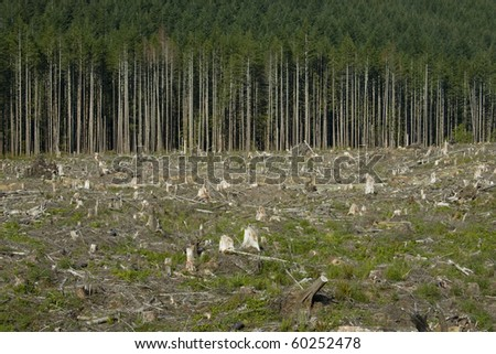 Edge of a clearcut forest block. - stock photo