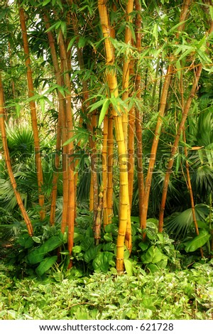 Edge of bamboo forest in Cozumel Mexico. - stock photo