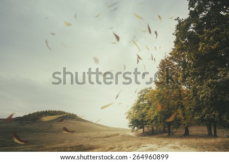 edge of forest with leaves blown by wind - stock photo