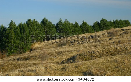 Edge of the fir tree forest