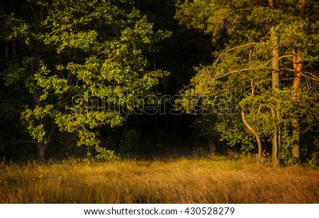 edge of the forest at the end of the day - stock photo