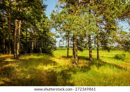 edge of the forest in summer day - stock photo