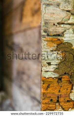 Edge of the wall, which was decaying wood termites damage. - stock photo