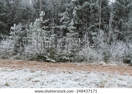 Edge of winter forest covered iniem - stock photo