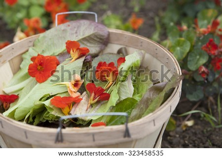 Edible Flower Salad Ingredients - stock photo