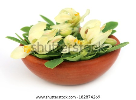 Edible moringa flower with leaves on a brown bowl over white backgrokund  - stock photo