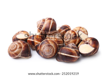 Edible snails (escargot) on white background - stock photo