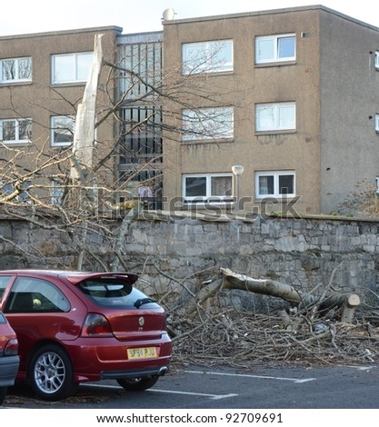 EDINBURGH - JANUARY 7: a fallen tree on January 7, 2012 in Edinburgh, Scotland. Strong winds in the first week of 2012 caused chaos across Scotland's central belt.