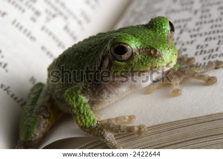 Educated Frog. A gray tree frog catching up on some reading. - stock photo