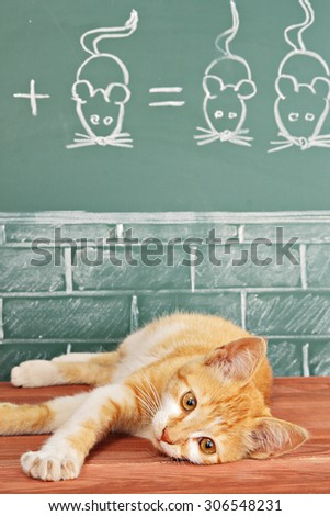 Education idea about foxy Cat studied mathematics on example of addition of mice - stock photo