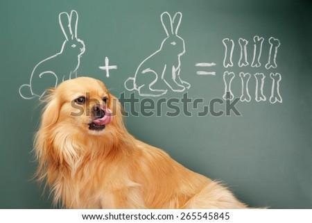 Education idea joke with funny dog studying mathematics. Focus on eyes of dog - stock photo