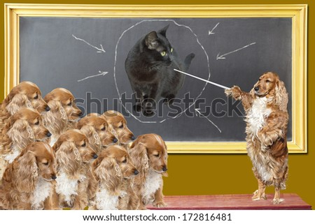 Education lesson for dogs  - stock photo