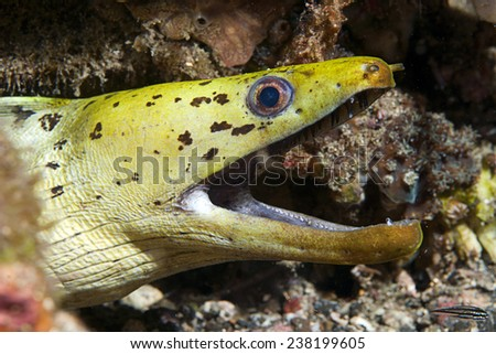 EEL - stock photo