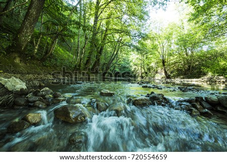 Effervescent mountain river flowing in the depths of the forest