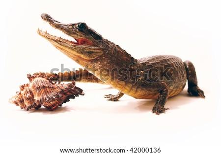 effigy of the crocodile and seashell - stock photo