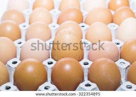 Egg, Chicken Egg - stock photo
