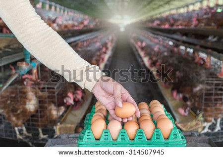 egg chicken farm, Focus at hand pick the egg