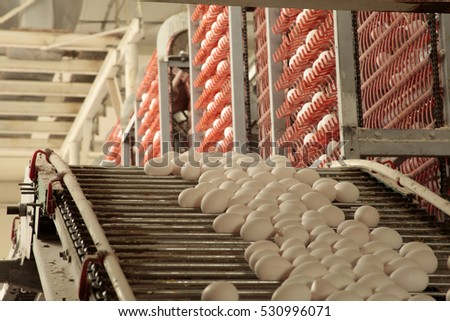 Egg factory...production line