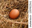 egg in a nest of straw - stock