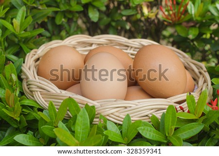 egg in the basket on green leaves