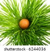 egg in the green grass - stock photo