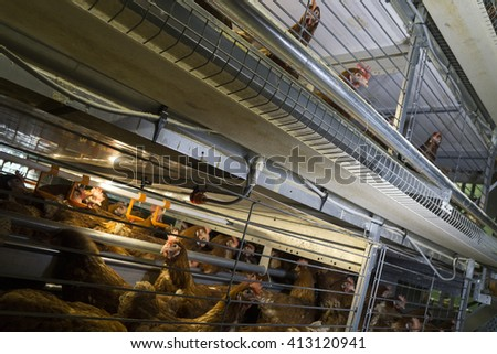 Egg-laying chickens (hens) in poultry farm cages - stock photo