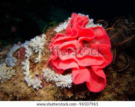 egg of sea slug - stock photo