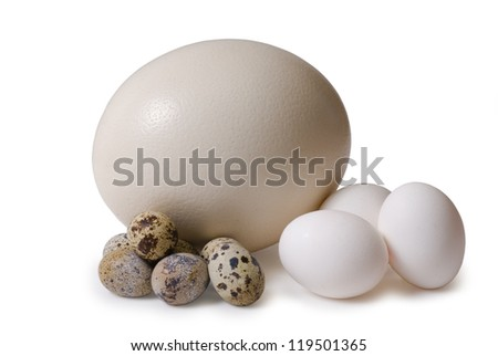 Egg of the ostrich, hens, femail quails - stock photo