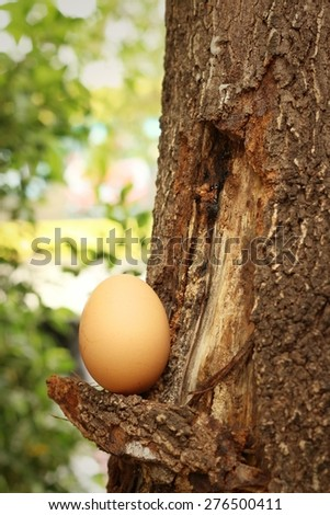 egg on a background of brown wood. - stock photo
