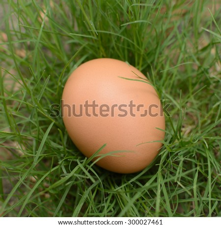 egg on the grass