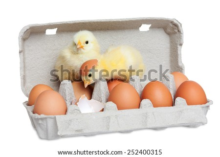 Egg package with cute chicks - stock photo