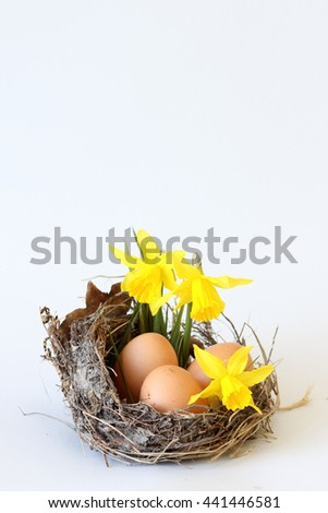 Eggs and daffodils in real nest, on white background