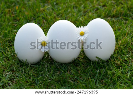 eggs and white flower in the fresh spring grass - stock photo