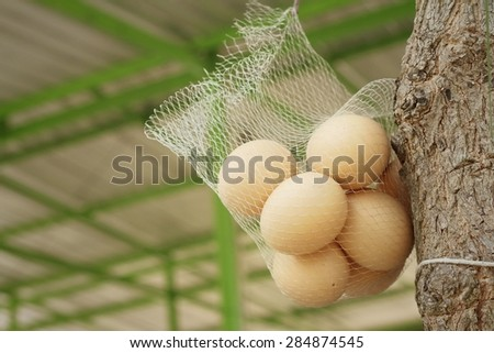 Eggs hanging on a tree at the park. - stock photo
