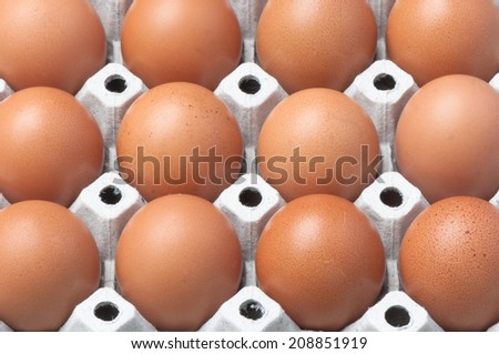 Eggs in a row - stock photo